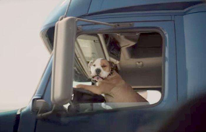 subaru-dog-commercial