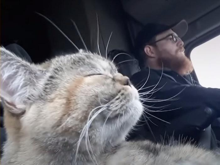 tora-the-trucker-cat