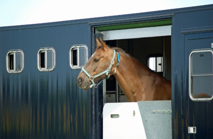 horse-in-trailer